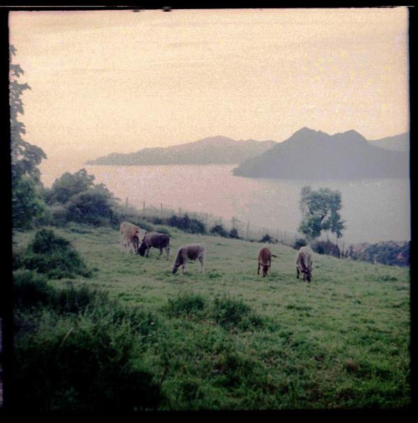 Vaques Piana